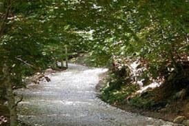Δάσος Ελατιάς (Καρά Ντερέ)