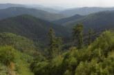 Δάσος Φρακτού Δράμας